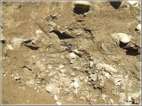 Les vestiges ne sont pas toujours spectaculaires. Cette agglomération de pierre, bien visible dans une coupe, correspond peut - être au comblement d'un ancien fossé. Les fragments de poterie qui s'y sont accumulés fournissent souvent aux archéologues des indices essentiels pour la datation du site