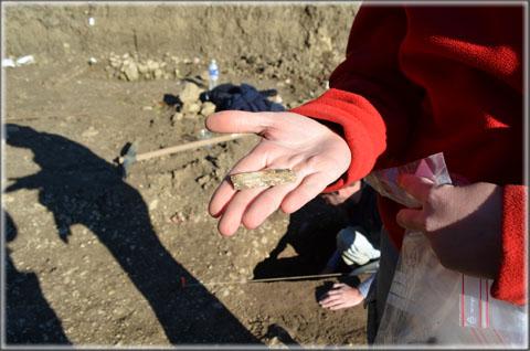 Fragment de lame en silex, typique du Néolithique, découvert sur le site.